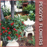 Peggy's Flowers