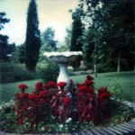 Central flower bed in the bad yard. 702 Marion Street, Kings Mountain, North Carolina. Circa 1975.